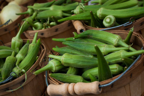 feasibility of okra mucilage coir fiber and wastepaper